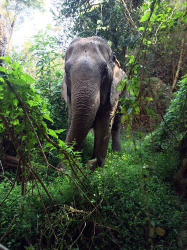 Elephant Jungle
