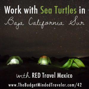 Work with Sea Turtles in Baja