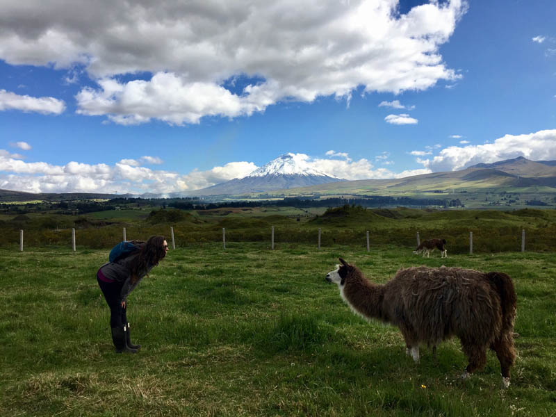 Llama Cotopaxi