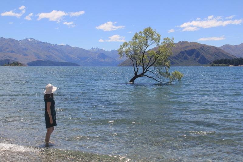 #thatWanakatree in New Zealand