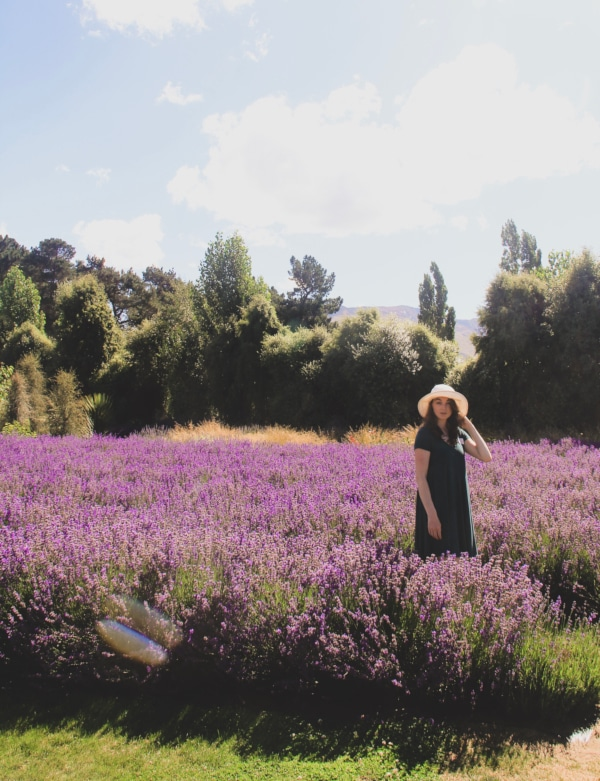 Wanaka City Guide Lavender Fields