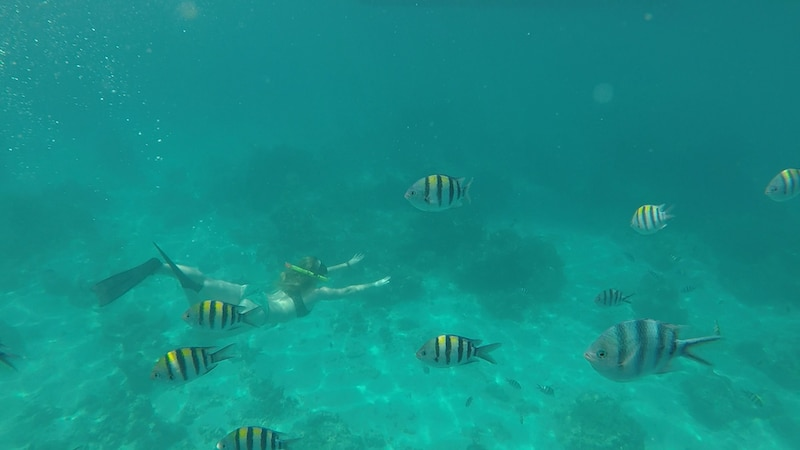 snorkeling or scuba diving on gili t