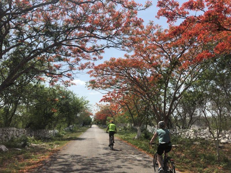 flat scenic terrain in Yucatan